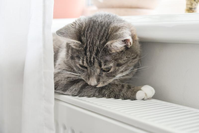 Chat d?tendant sur le radiateur chaud photographie stock libre de droits