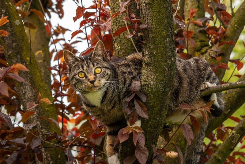 Chat dans l'arbre vous regardant images stock