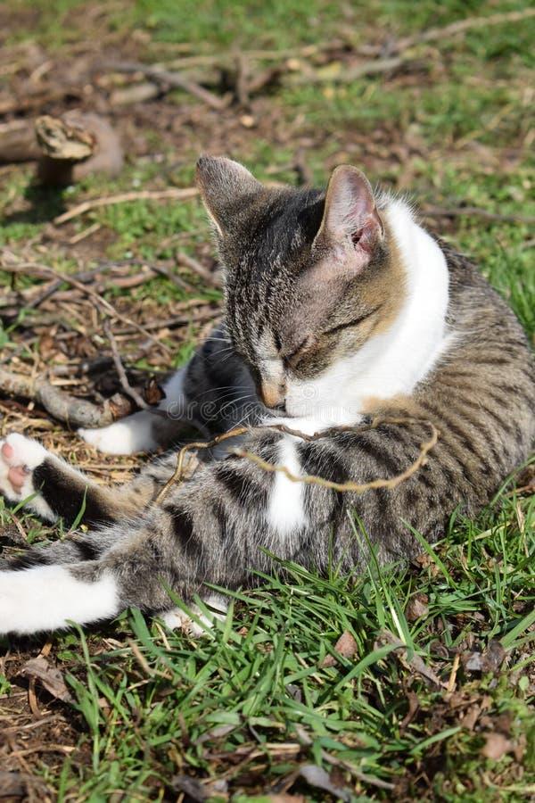 Chat dans l'herbe photos stock
