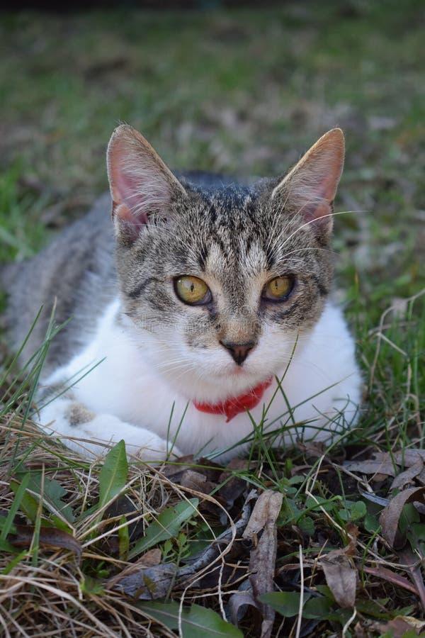 Chat dans l'herbe image stock
