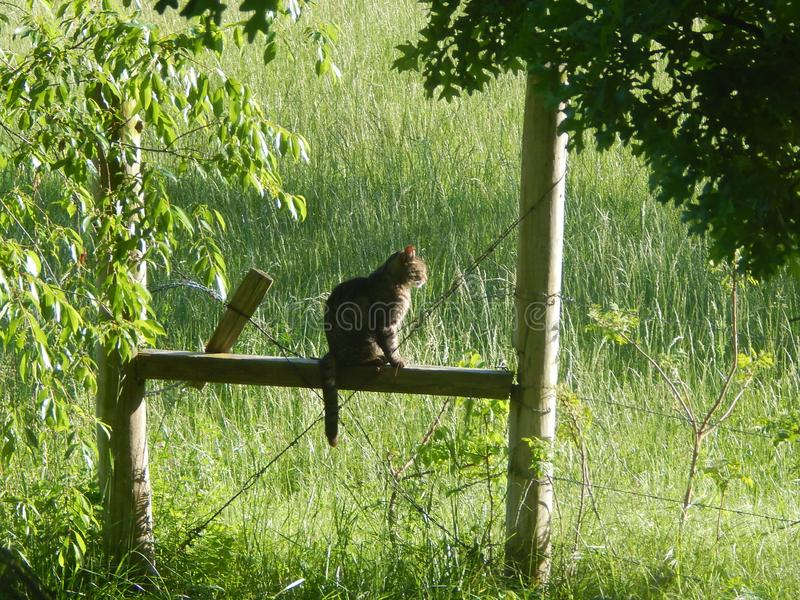 Chat dans la contemplation photographie stock