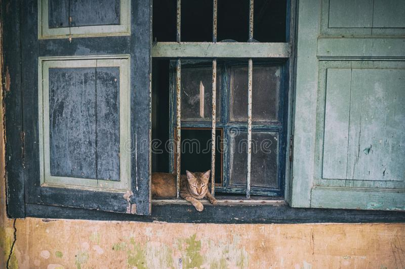Chat dans la fenêtre sur les ruines d'une vieille maison image stock