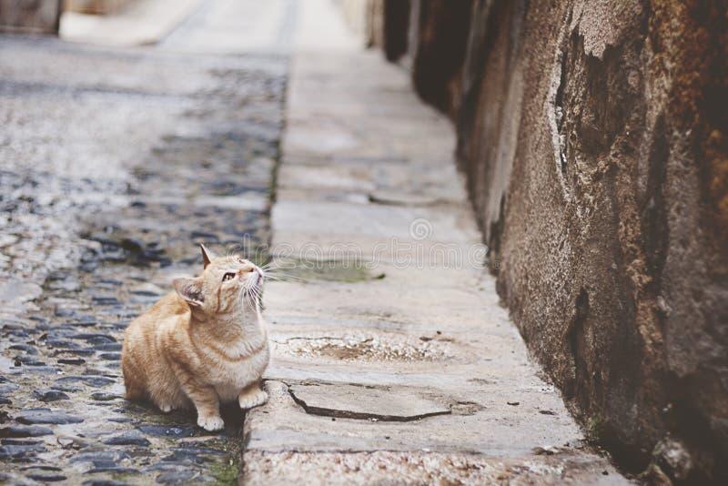 Chat dans la rue photographie stock libre de droits