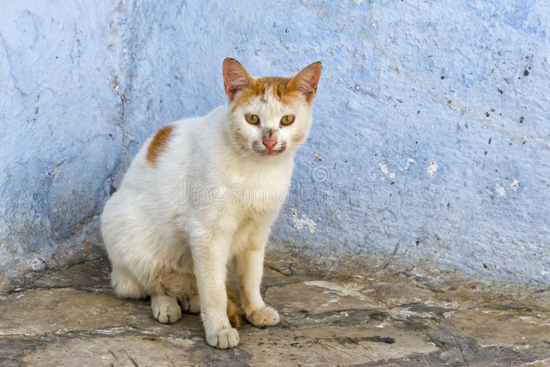 Chat dans la rue dans Kairouan, Tunisie photographie stock libre de droits