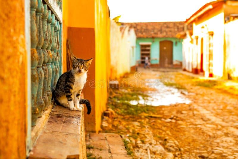 Chat dans la ville coloniale Trinidad, Cuba photo stock