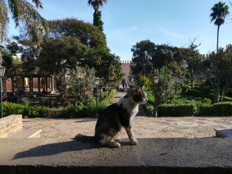 Chat dans le jardin photo libre de droits