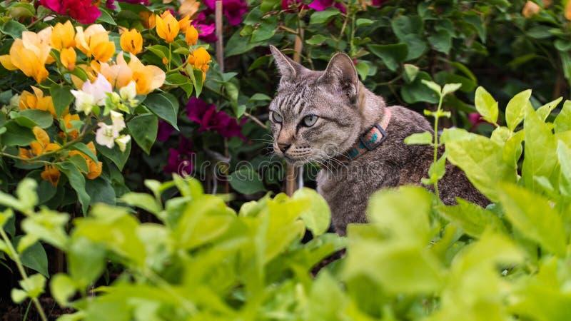 Chat dans le jardin d'agrément image libre de droits