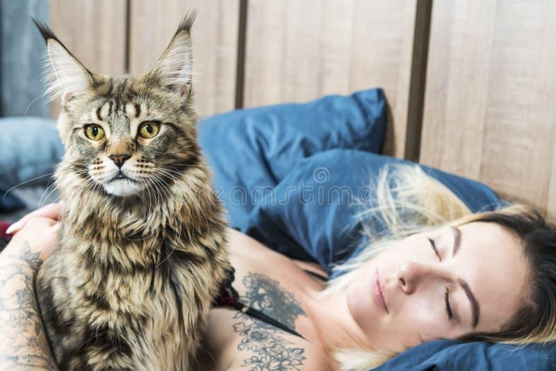 Chat dans le lit de la femme de sommeil images libres de droits