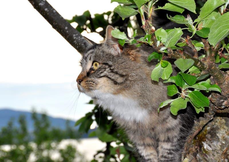 Chat dans le pommier photo libre de droits