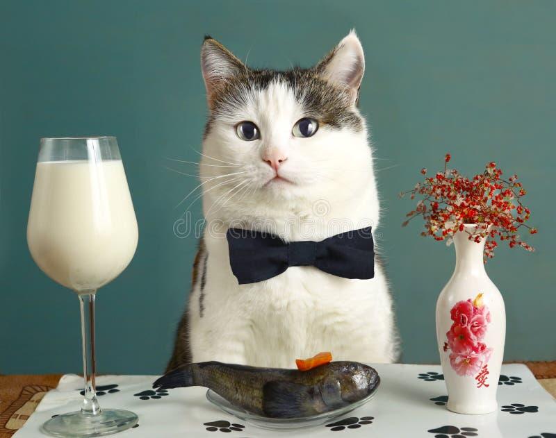 Chat dans le restaurant avec du lait et le poisson cru image libre de droits