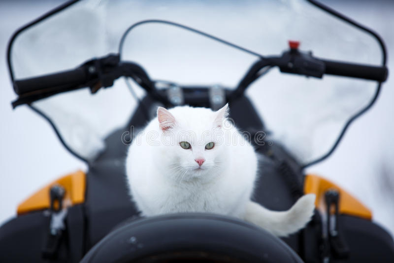 Chat dans le snowmobile photos libres de droits
