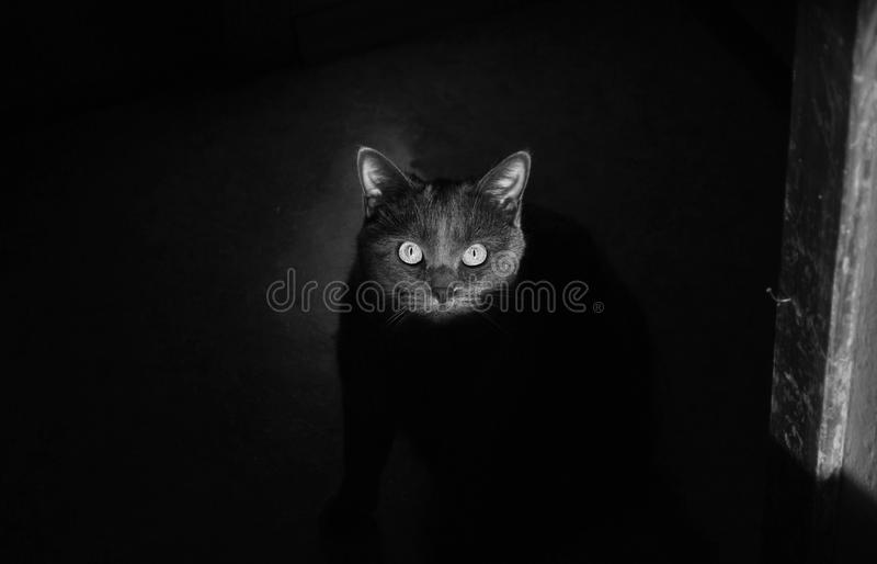 Chat dans les ombres photographie stock libre de droits
