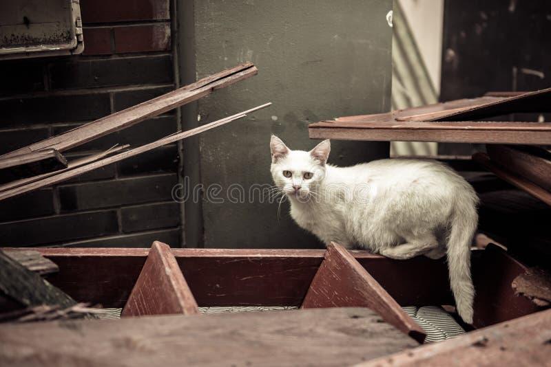 Chat dans les ruines photo libre de droits