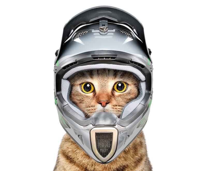 Chat dans un casque de bicyclette photo libre de droits