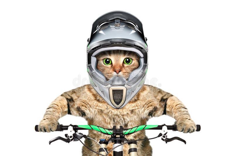 Chat dans un casque sur une bicyclette photo stock