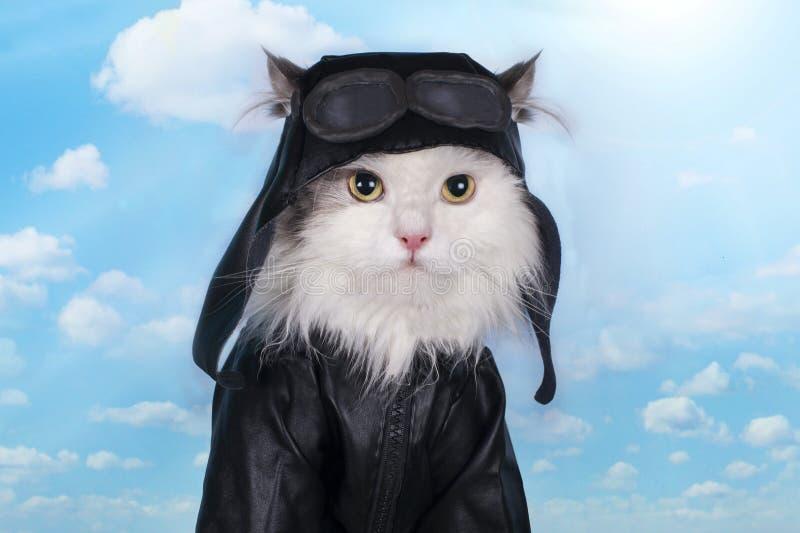 Chat dans un costume contre le pilote de ciel photos stock