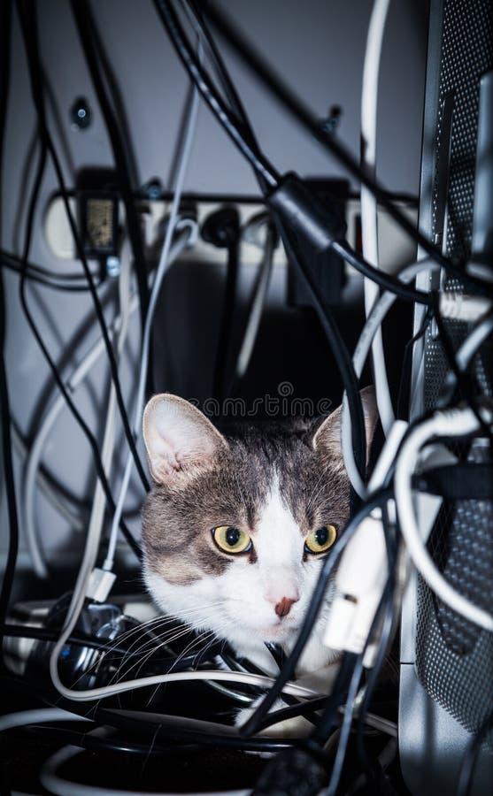 Chat dans un endroit dangereux photos stock