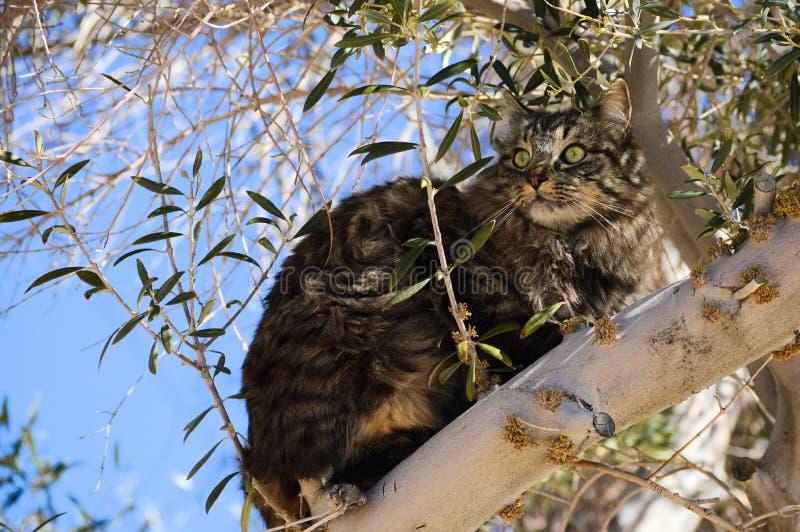 Chat dans un olivier image libre de droits