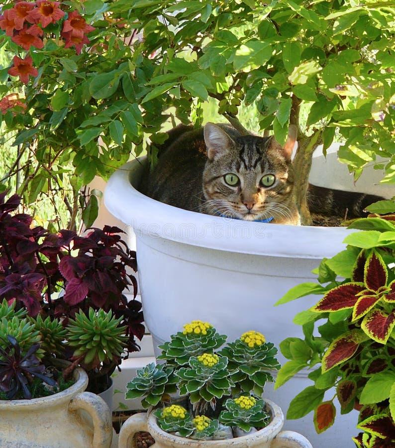 Chat dans un pot de fleur parmi des fleurs images stock