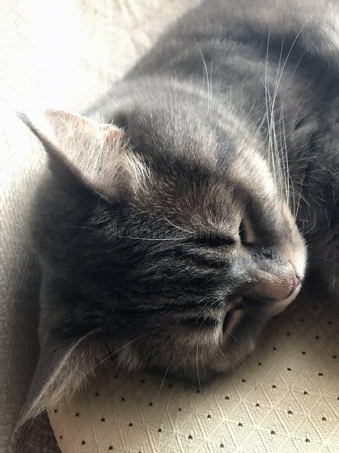 Chat dans une chaise confortable à la maison photo stock