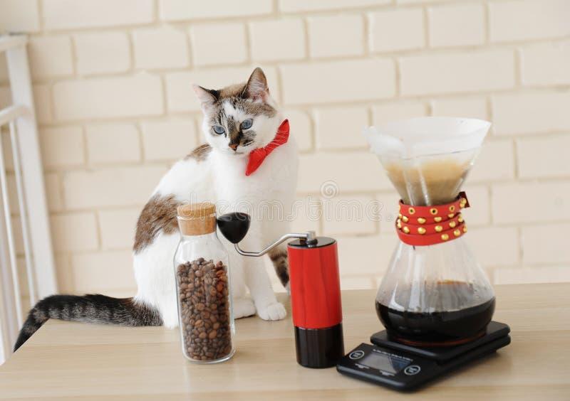 Chat de barman Café manuel alternatif de brassage de main Filtre en lots d'égouttement Rectifieuse de caf? rouge ?chelle ?lectron photographie stock libre de droits