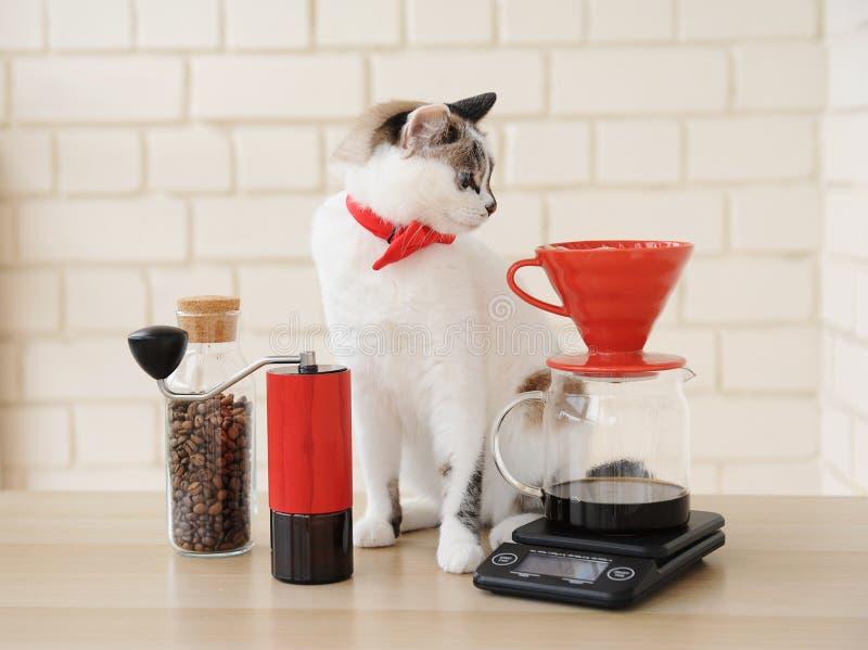 Chat de barman Café manuel alternatif de brassage de main Filtre en lots d'égouttement Rectifieuse de caf? rouge ?chelle ?lectron image stock