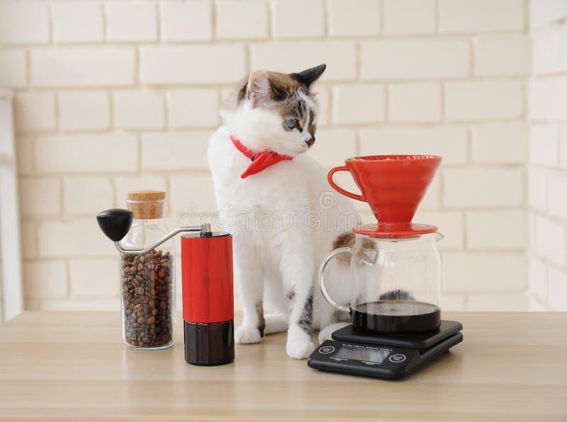 Chat de barman Café manuel alternatif de brassage de main Filtre en lots d'égouttement Rectifieuse de caf? rouge ?chelle ?lectron photographie stock