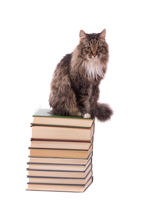 Chat de Brown sur livres sur le fond blanc photo stock