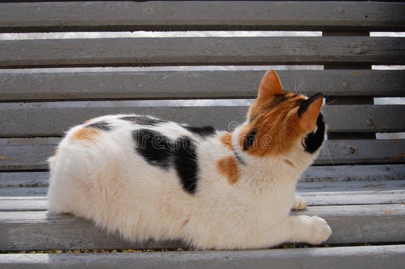 Chat de calicot se trouvant sur un banc et regardant loin images libres de droits