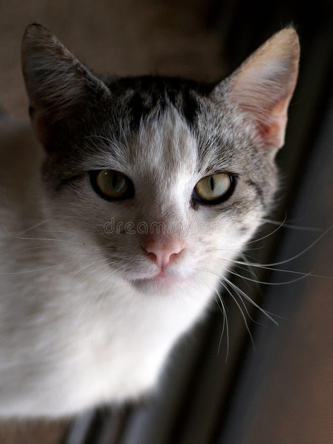 Chat de chat photographie stock libre de droits