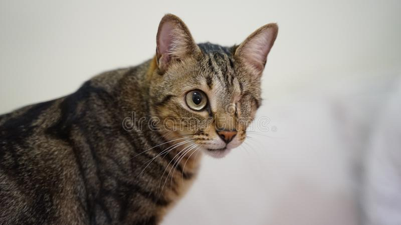 Chat de débronchement avec un congé d'oeil photo stock