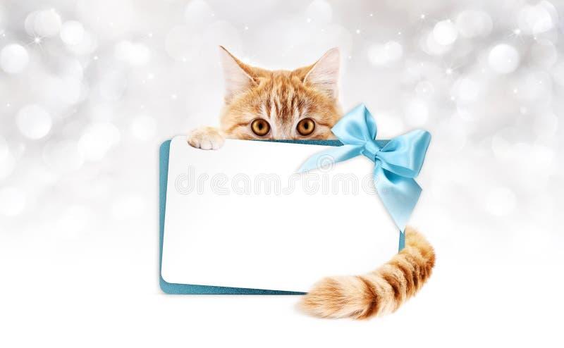 Chat de gingembre avec la carte cadeaux et le ruban bleu illustration stock