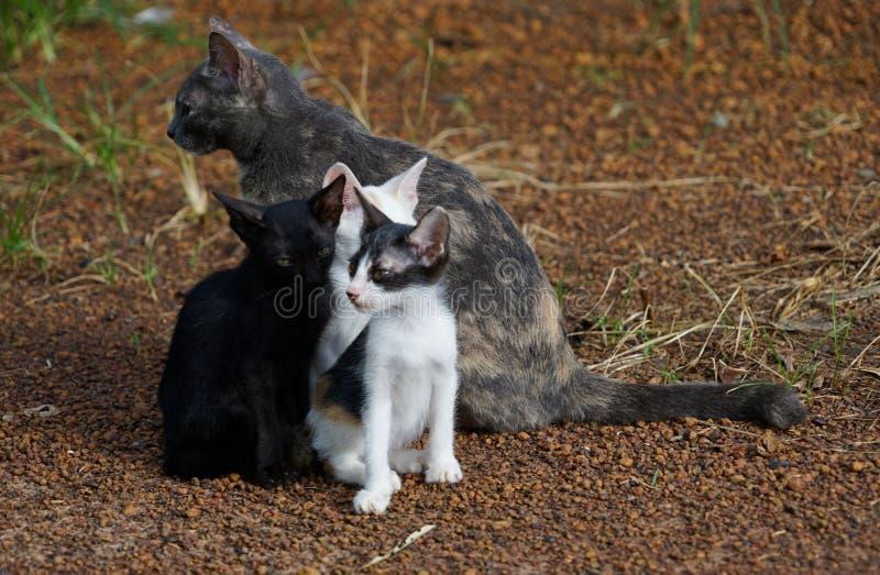 Chat de gris de famille de chats Joli chat Beau chat images stock