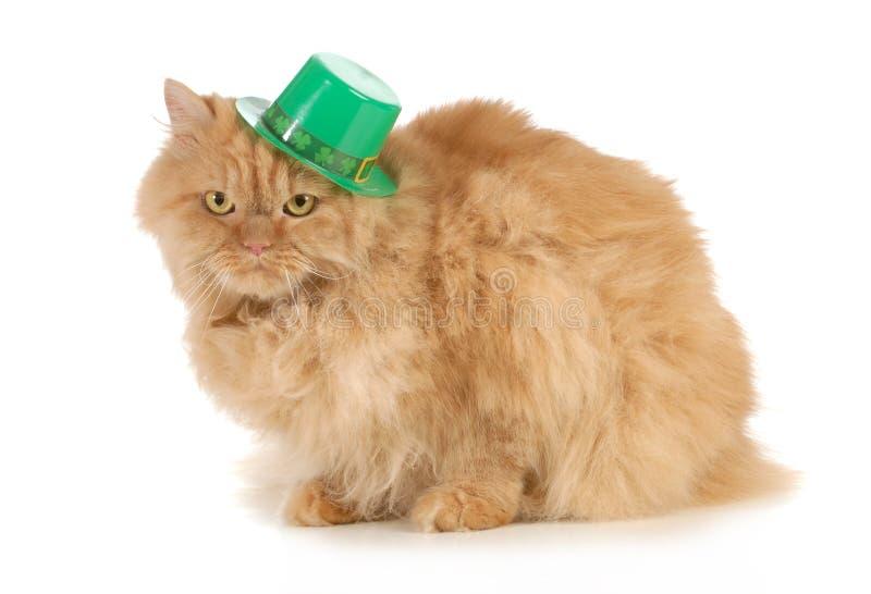 Chat de jour de St Patricks images libres de droits