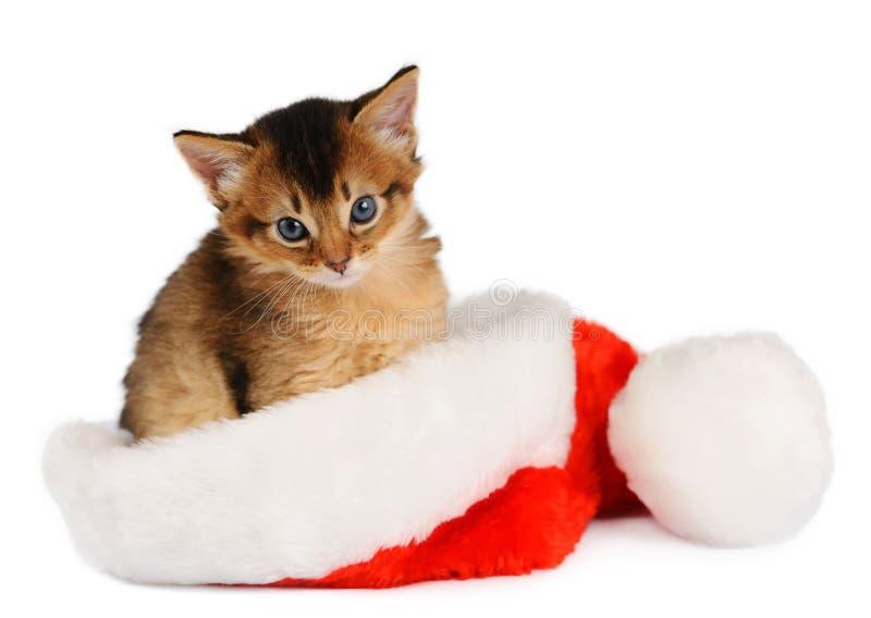 Chat de Joyeux Noël avec le chapeau de Santa sur le blanc photographie stock libre de droits