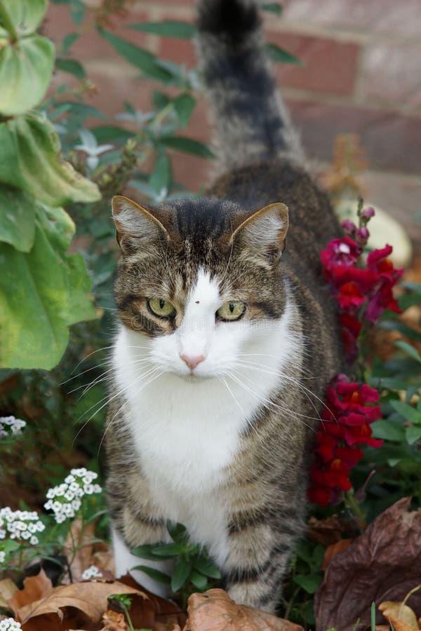 Chat de Kitty dans le lit de fleur images stock