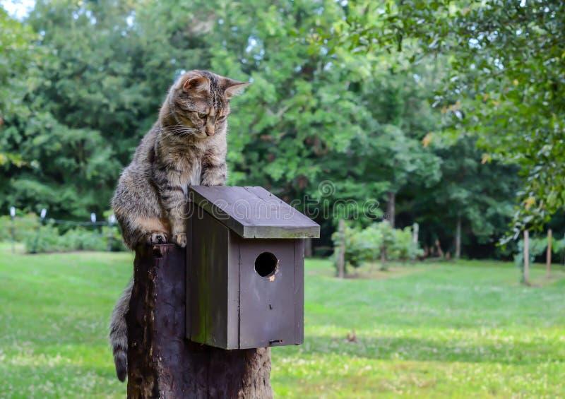 Chat de Kitty se reposant au-dessus de la volière image stock