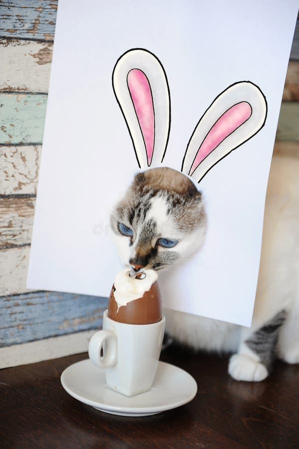 Chat de lapin de Pâques mangeant l'oeuf de chocolat Chaton aux yeux bleus avec des oreilles de lapin peintes sur la feuille blanc image stock