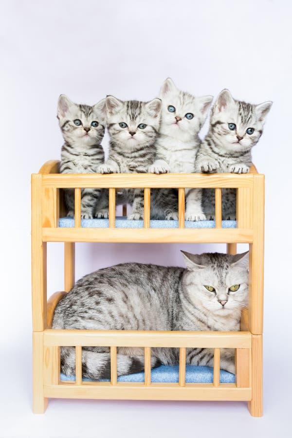 Chat de mère avec quatre jeunes dans le lit photographie stock libre de droits