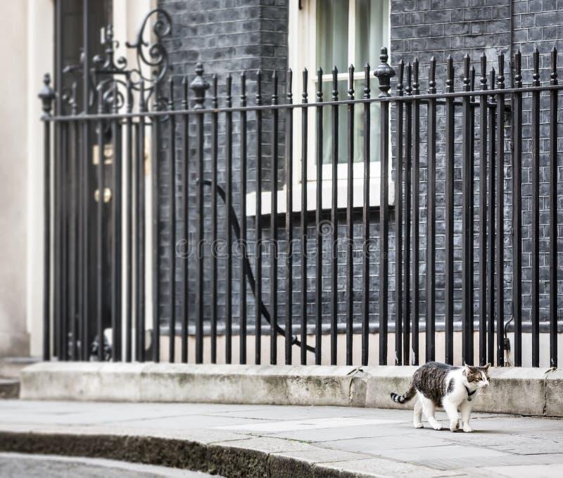 Chat de Mouser de chef du Downing Street 10 images stock