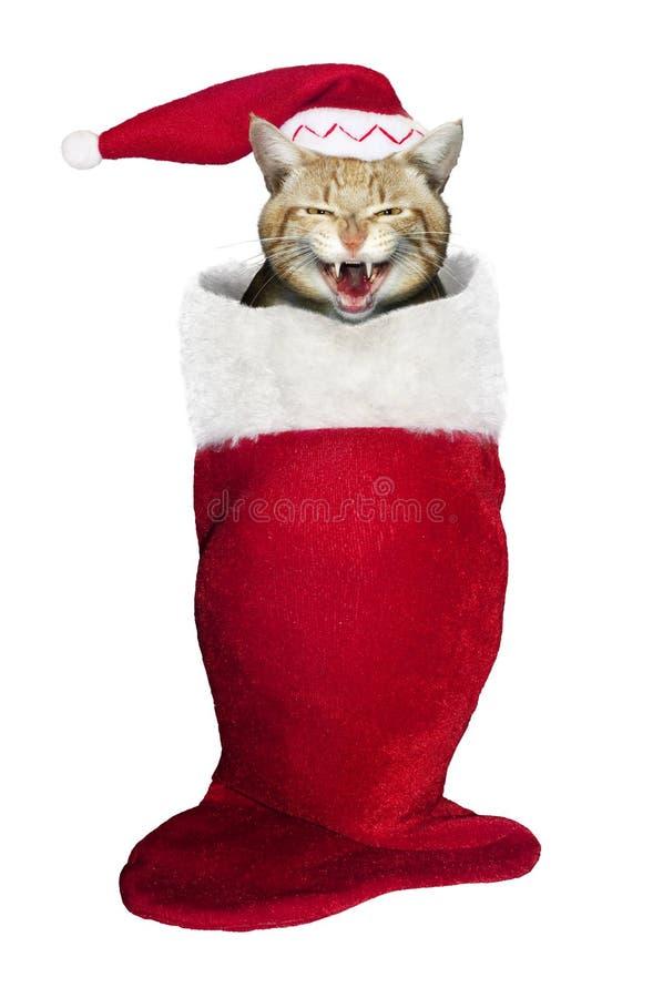 Chat de Noël image libre de droits