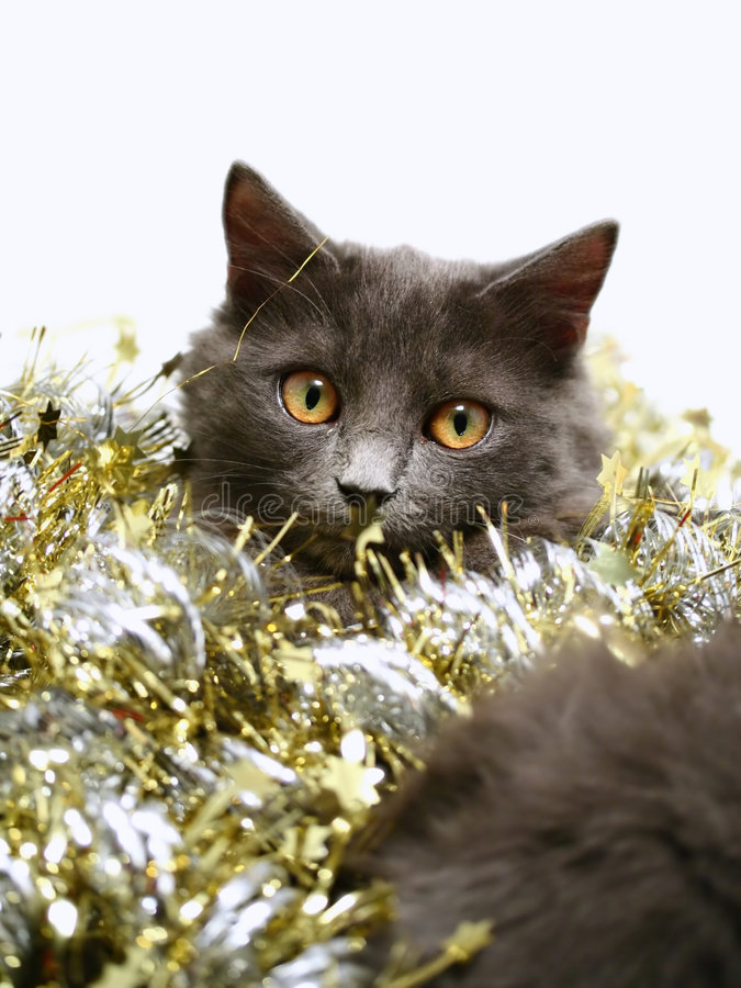 Chat de Noël photo stock