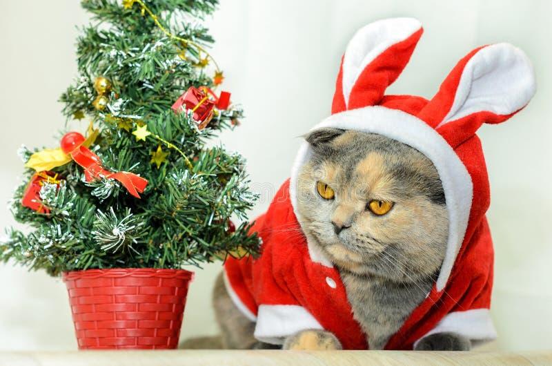 Chat de Noël photo libre de droits