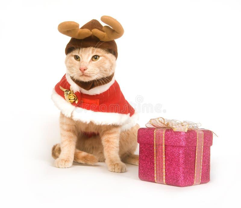 Chat de Noël photographie stock