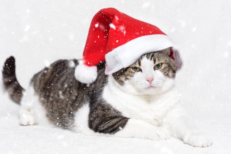 Chat de Noël dans les flocons rouges de chapeau et de neige de Santa Claus sur le fond blanc photo libre de droits