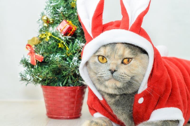 Chat de Noël s'habillant dans le costume rouge de lapin image libre de droits