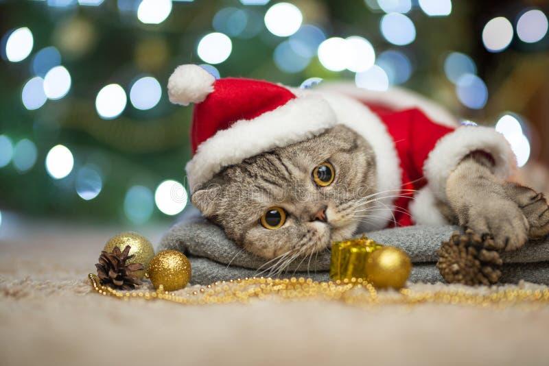 Chat de nouvelle année, de Noël dans le chapeau de Santa et costume sur le fond d'un arbre et des lumières de Noël images libres de droits