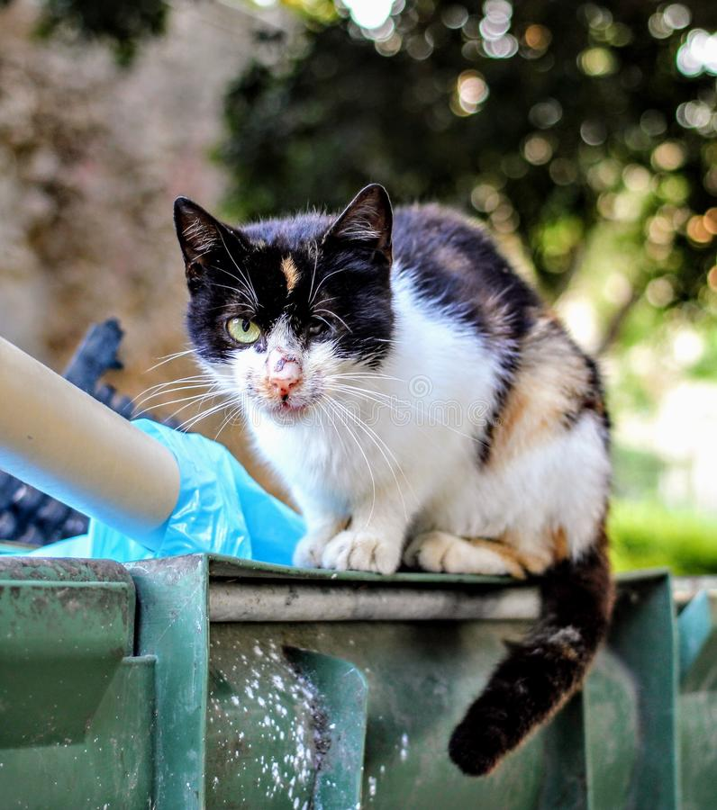 Chat de pirate photo libre de droits