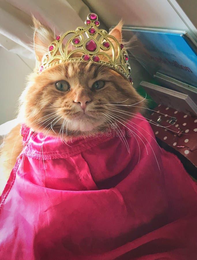 Chat de ragondin rouge du Maine habillé vers le haut de comme princesse Anna de congelé avec la couronne et le cap photographie stock