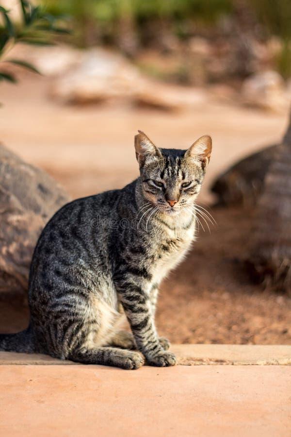 Chat de regarder dans la station de vacances africaine photos stock